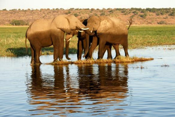 Diese drei Elefanten halten zusammen.